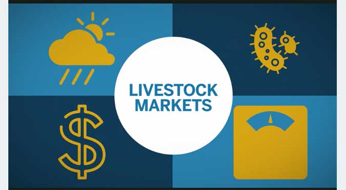 An Introduction to Trading CME Livestock Futures & Options